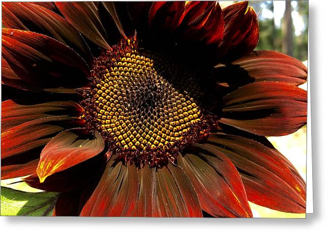 Fibonacci Hues Greeting Card