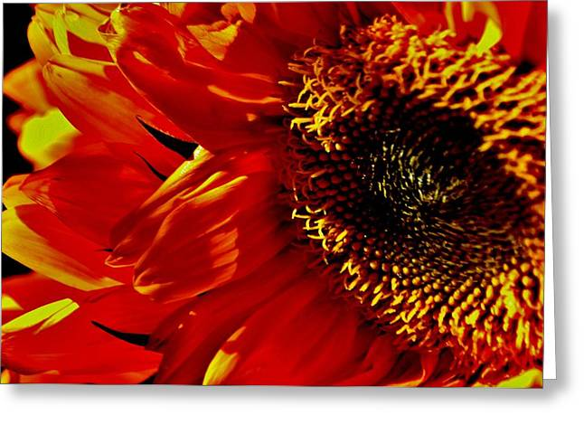 Fickle Sunflower Greeting Card
