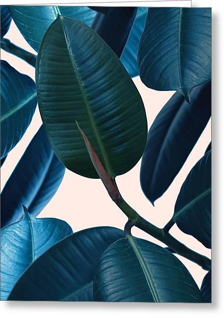 Ficus Elastica 2 Greeting Card