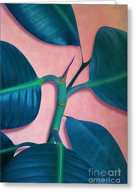 Ficus Elastica Greeting Card by Mark Ashkenazi