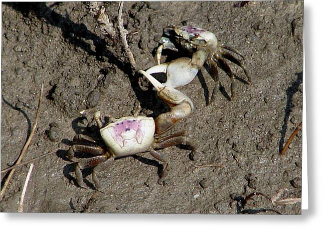Fiddler Crabs Fighting 2 Greeting Card