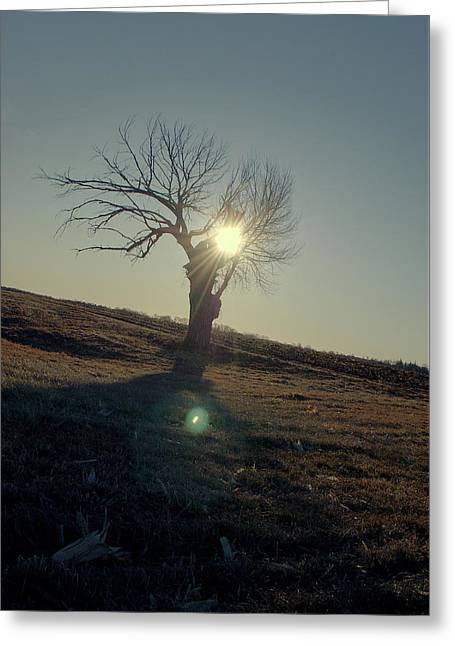 Field And Tree Greeting Card