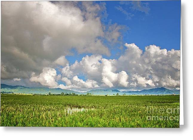 Greeting Card featuring the photograph Field by Charuhas Images