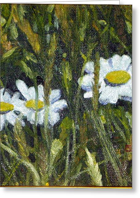 Field Daisies Greeting Card by Susan Coffin