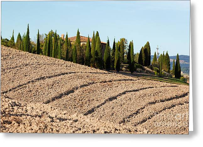 Field, Farm House Among Cypress Trees. Italy Greeting Card