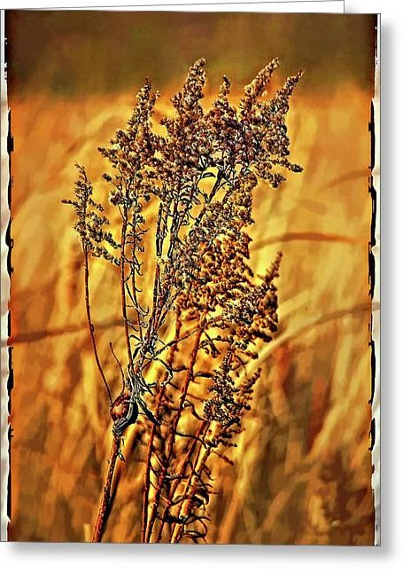 Transfer Digital Art Greeting Cards - Field Frolic Greeting Card by Steve Harrington