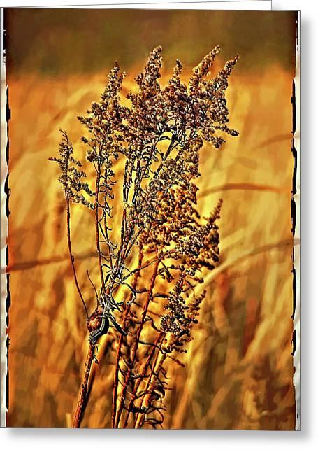 Field Frolic Greeting Card by Steve Harrington