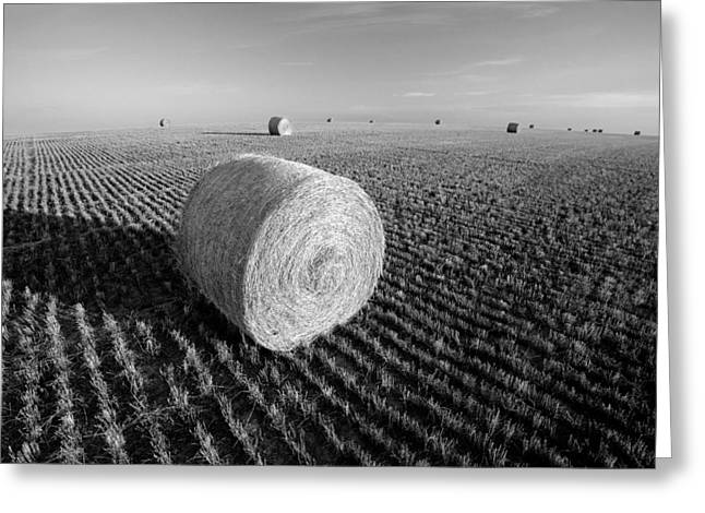 Field Full Of Bales In Black And White Greeting Card by Todd Klassy