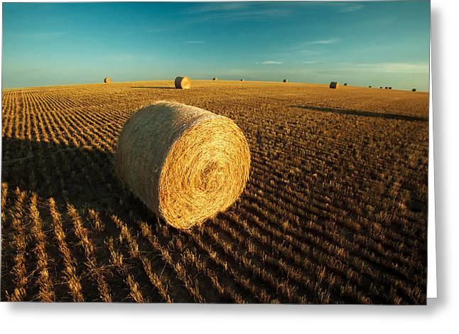 Field Full Of Bales Greeting Card by Todd Klassy
