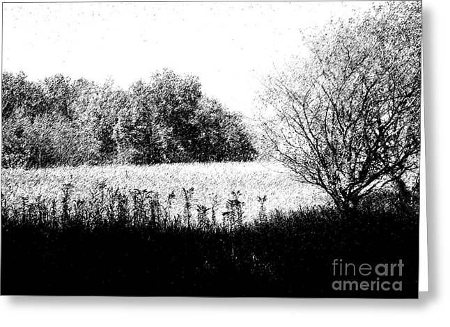 Field In Black And White Greeting Card by John  Bichler