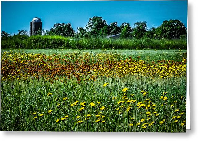 Field In June Greeting Card