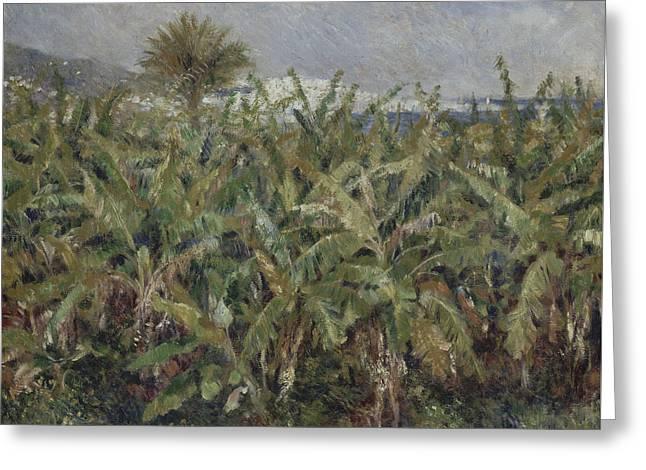 Field Of Banana Trees  Greeting Card by Auguste Renoir