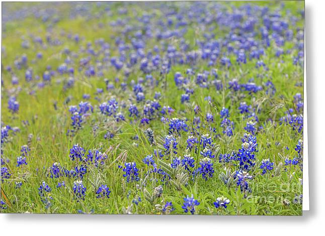 Field Of Blue Bonnet Flowers Greeting Card