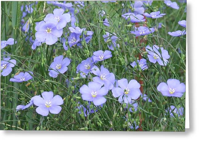 Field Of Blue Greeting Card by Dennis Wilkins