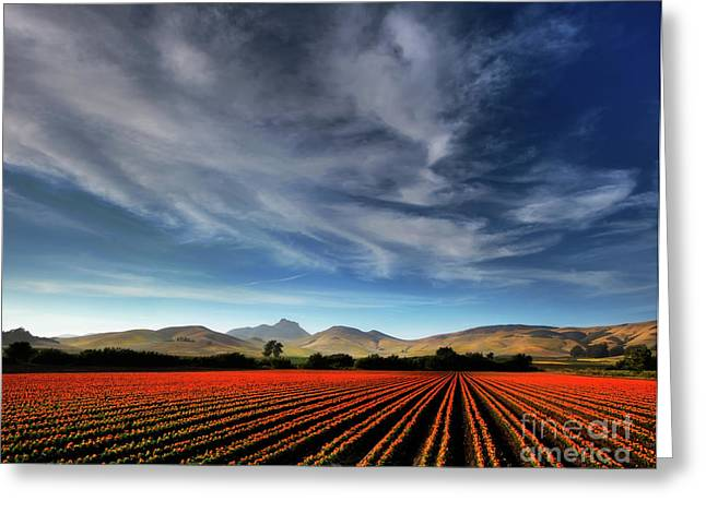 Field Of Color Greeting Card