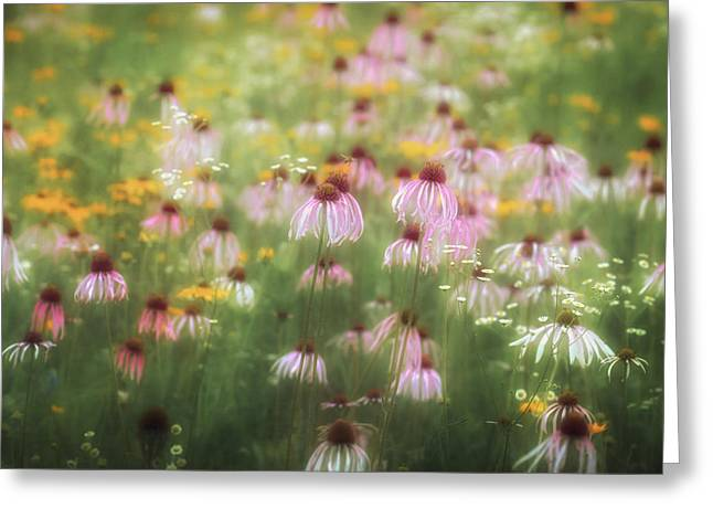 Field Of Coneflowers 5x6 Greeting Card