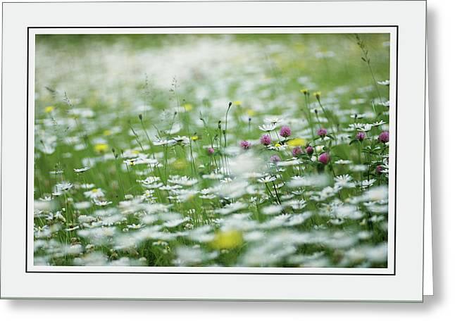 Field Of Daisies And Green Foliage Greeting Card by Georgiana Romanovna