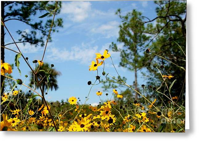 Field Of Daisies At Corkscrew Swamp Greeting Card