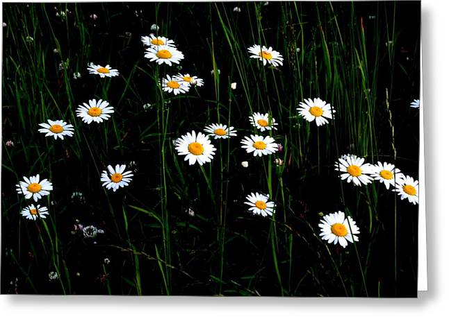 Field Of Daisies Greeting Card by Jeanette Oberholtzer