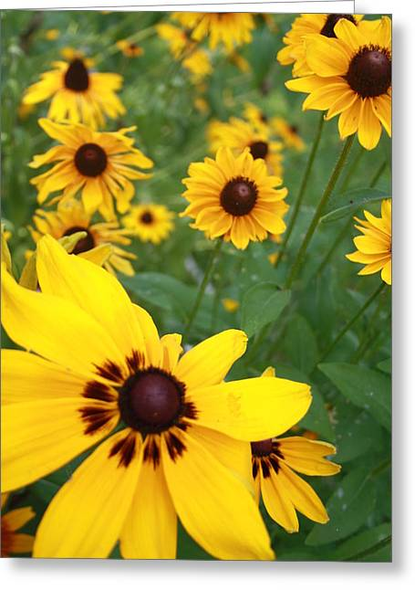 Field Of Daisies Greeting Card by Maria Young