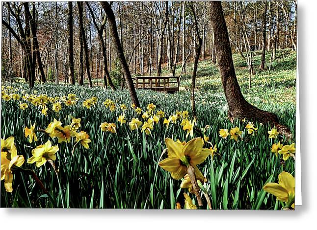 Field Of Daffodils Greeting Card by Elijah Knight