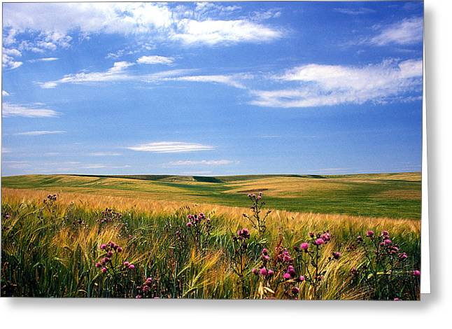 Landscape Framed Prints Greeting Cards - Field of Dreams Greeting Card by Kathy Yates