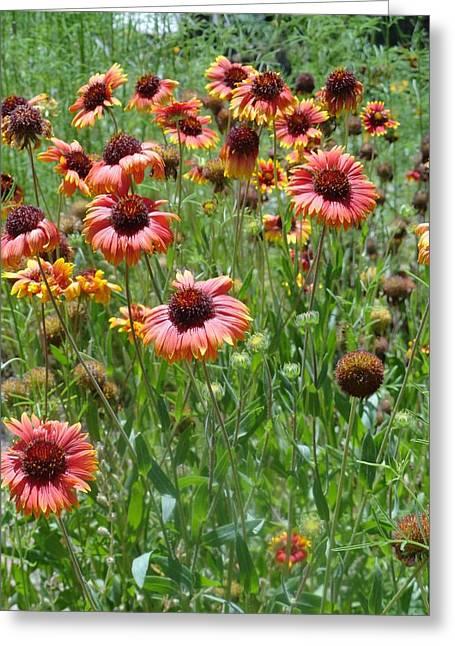 Field Of Flower Eyes Greeting Card