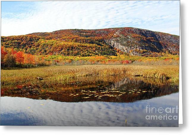 Field Of Fall Splendor Greeting Card by Katie W
