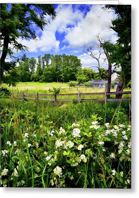 Field Of Flowers Greeting Card by Bob Cuthbert