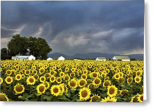 Field Of Flowers  Greeting Card by James Steele