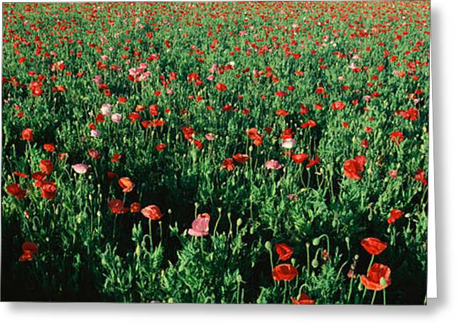 Field Of Flowers, Texas Greeting Card