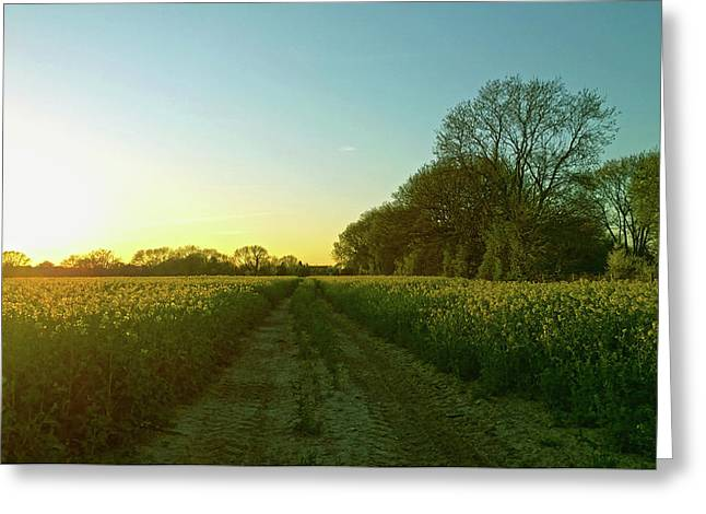 Greeting Card featuring the photograph Field Of Gold by Anne Kotan