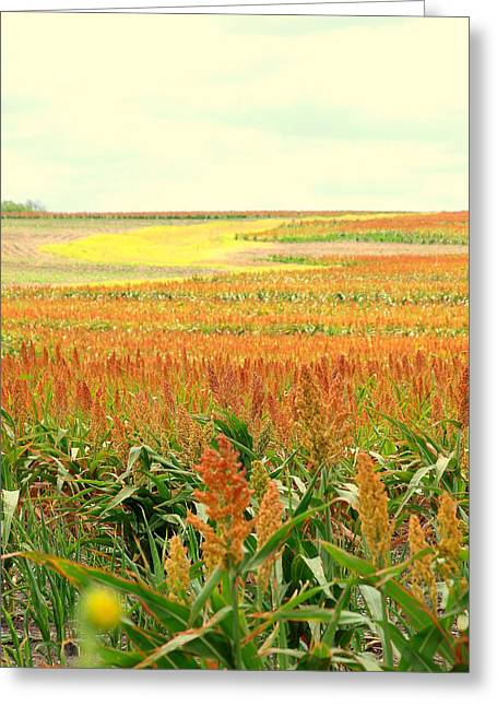Field Of Gold Greeting Card by James Granberry