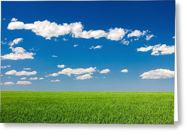 Field Of Grass Against A Perfect Blue Sky Greeting Card by Todd Klassy