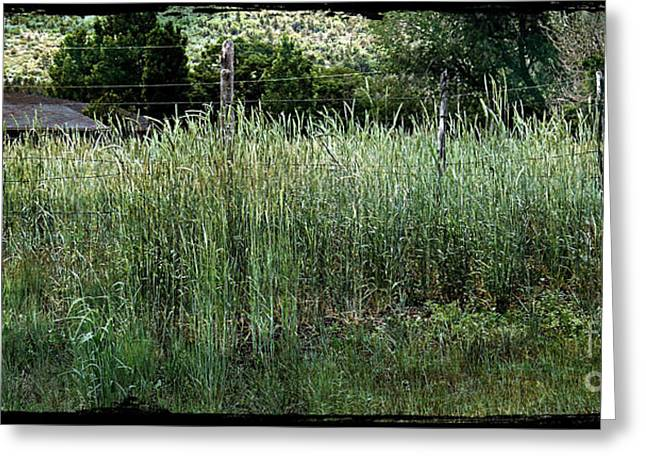 Field Of Grass Greeting Card
