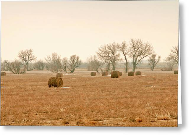 Field Of Hay Greeting Card by James Steele