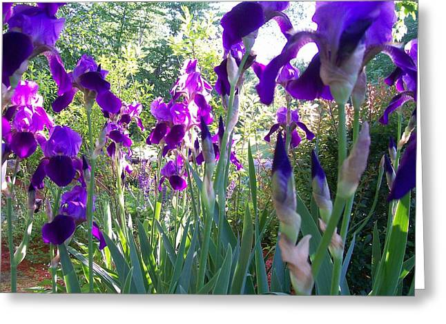 Greeting Card featuring the digital art Field Of Irises by Barbara S Nickerson