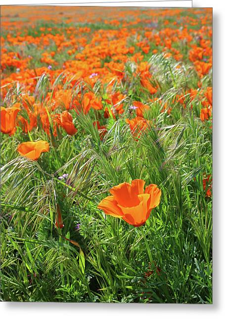 Greeting Card featuring the mixed media Field Of Orange Poppies- Art By Linda Woods by Linda Woods