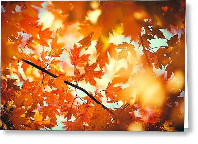 Field Of Orange Greeting Card by Todd Klassy
