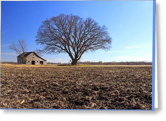 Field Of Past Dreams Greeting Card
