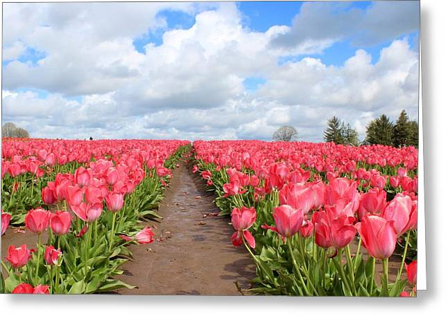 Field Of Pink Greeting Card
