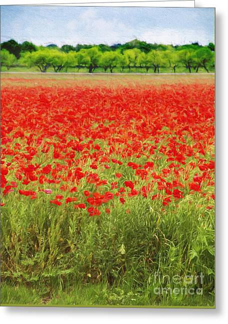 Field Of Red Poppies Greeting Card by Elena Nosyreva