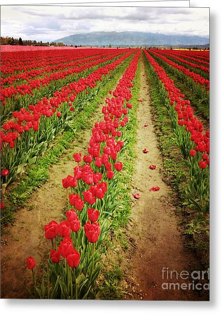 Field Of Red Tulips With Drama Greeting Card