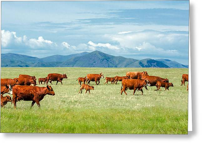 Field Of Reds Greeting Card by Todd Klassy
