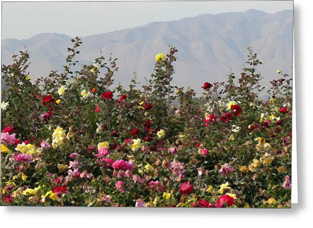 Greeting Card featuring the photograph Field Of Roses by Laurel Powell