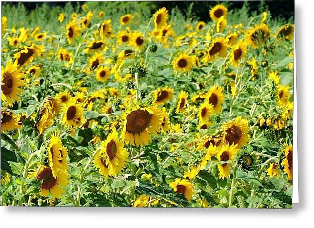 Field Of Sunshine Greeting Card by Melissa Davis