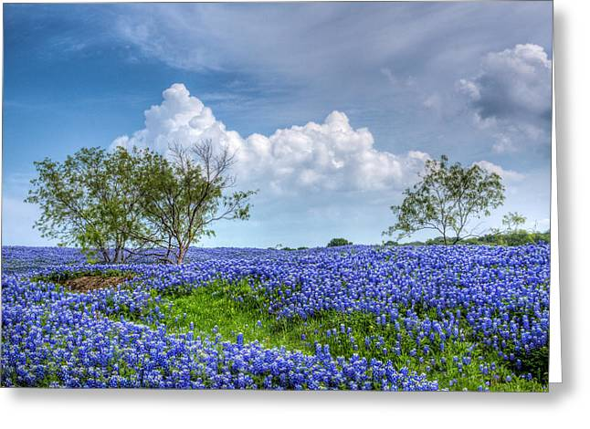 Field Of Texas Bluebonnets Greeting Card