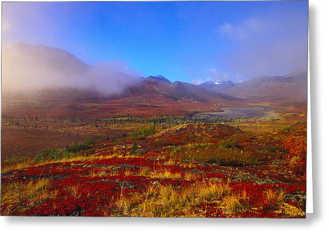 Tombstone Territorial Park Greeting Cards - Field Of Vivid Autumn Colors Greeting Card by Nick Norman