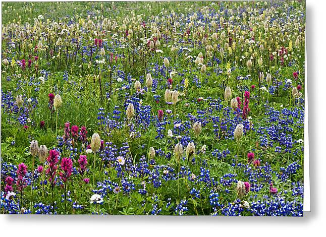 Field Of Wildflowers Greeting Card by Greg Vaughn - Printscapes