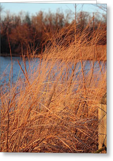 Amber Brush On The River Greeting Card